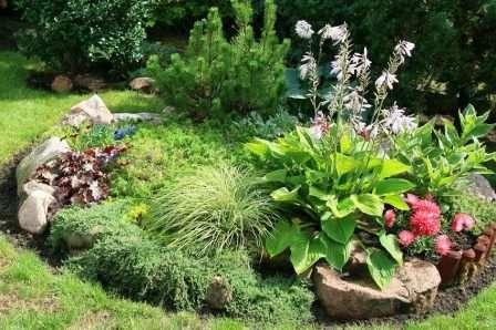 Звичайна клумба з камінням і декількома видами рослин