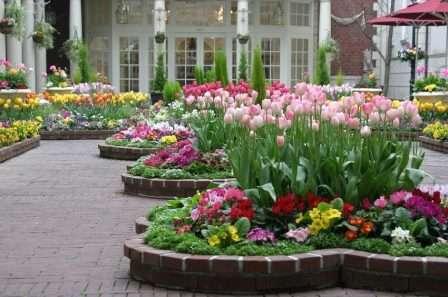 Красива клумба з тюльпанами оформлена цегляним бордюром
