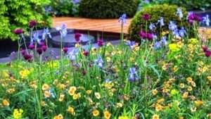 квітники та клумби фото назва