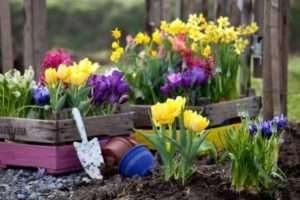 Квітники і клумби своїми руками - як зробити клумбу і квітник
