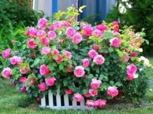 квітники та клумби своїми руками