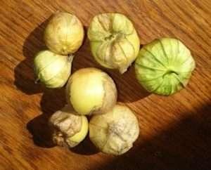 фізаліс мексиканський або овочевий