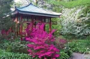 Рододендрон садовий, посадка і догляд