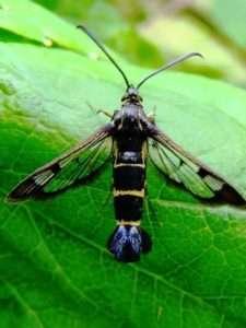 Боротьба з малиновим жуком2
