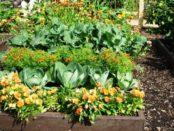Змішані посадки овочів