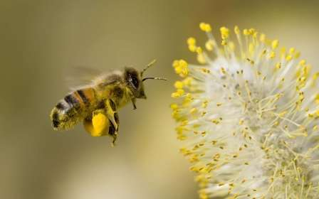 Лікувальні властивості пилку бджолиного для дітей