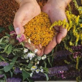 Як правильно вживати бджолиний пилок (обніжжя)