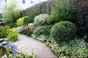 Які дерева і чагарники, посадити уздовж паркану і доріжок?