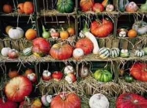 Декоративні сорти гарбуза з фото