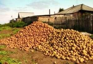 добриво для картоплі восени