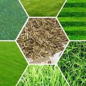 Як вибрати газонну траву