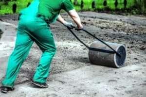 газонная трава для сада
