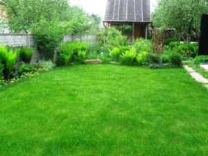як правильно посадити газонну траву