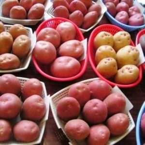 Насіннєва картопля: відбір і покупка