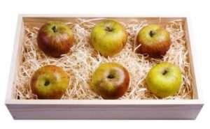 Зберігання яблук взимку: як правильно підготувати і зберігати