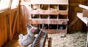 Дезінфекція курника в домашніх умовах, як її проводити