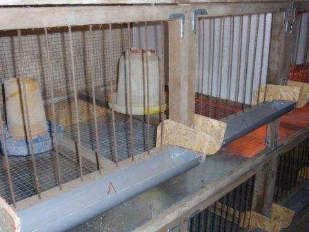 Розведення курей - несучок в клітках