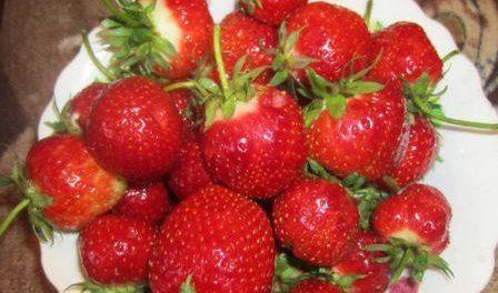 Хвороби і шкідники полуниці