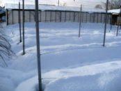 Підготовка винограду до зими