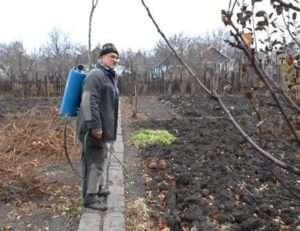 Осіння обробка винограду
