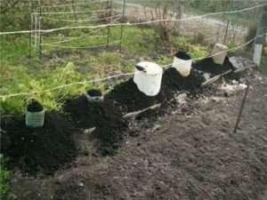 Покривний матеріал на зиму для рослин