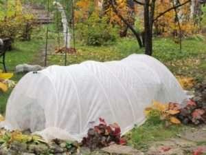 чим укривати рослини взимку на городі