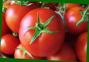 Вирощування томата Ляна