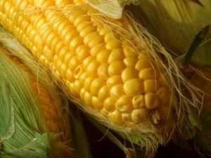 Як консервувати кукурудзу в качанах