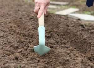 Підготовка ґрунту для посадки овочів восени