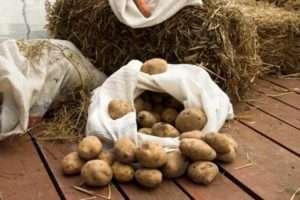 Підготовка картоплі для зберігання взимку