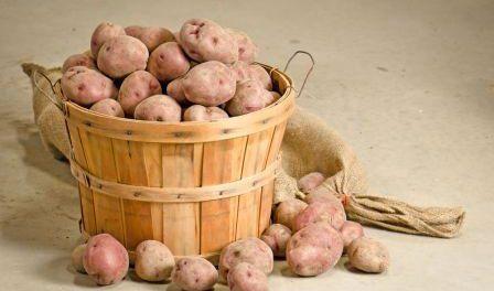 Де і як правильно зберігати картоплю на зиму в квартирі та на дачі