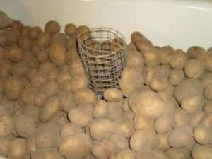 зберігання картоплі насипом в погребі