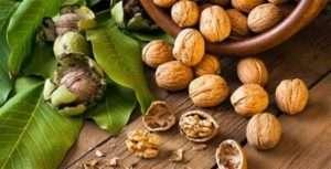 Як правильно збирати волоські горіхи