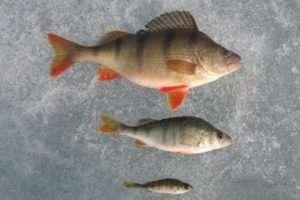 Рибалка в лютому