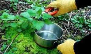 Посадка на дачній ділянці баклажанів - що купити для харчування рослин