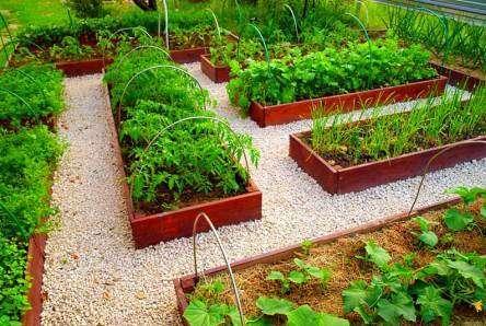 Город. Вирощування овочевих культур. Врожайність городу - як вирощувати овочі на городі