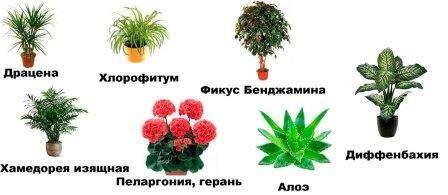 Кімнатні рослини - вирощування, догляд, каталог з назвами, фотографіями та описом