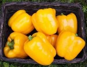 Які сорти жовтого перцю самі врожайні