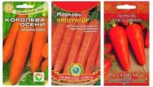 Найкращі солодкі сорти моркви для городу