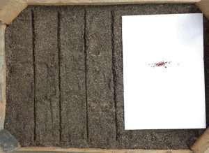 Як зберегти розсаду - зберігання полуниці взимку без шкідливих наслідків
