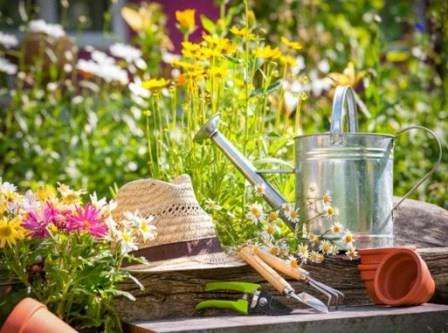 Садівництво. Робота в саду. Оформлення саду. Як правильно висаджувати декоративні рослини і доглядати за ними.