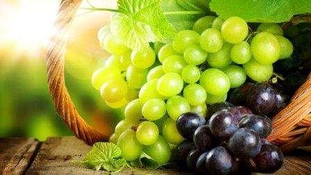 Виноградарство і виноробство - як доглядати за виноградом, як зробити вино з винограду