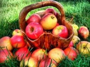 Садимо молоду яблуню навесні: особливості, технологія та алгоритм дій