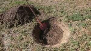 Підготовка ями для здійснення весняної посадки яблунь