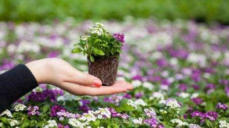 Посадка розсади квітів за місячним календарем
