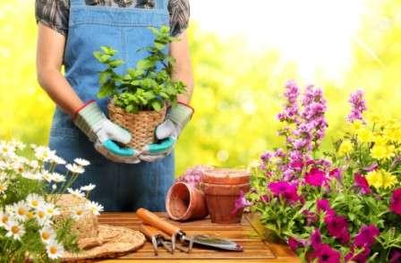 Вирощування розсади квітів