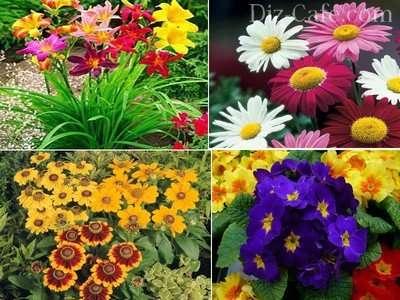 Коли садити розсаду квітів