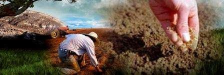 Місячний календар для садівника і городника на травень - клопоти в розпалі