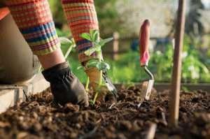 Місячний посівний календар на червень 2019 року для садівника і городника
