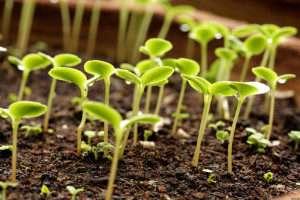Місячний календар на квітень – що можна робити в саду і на городі